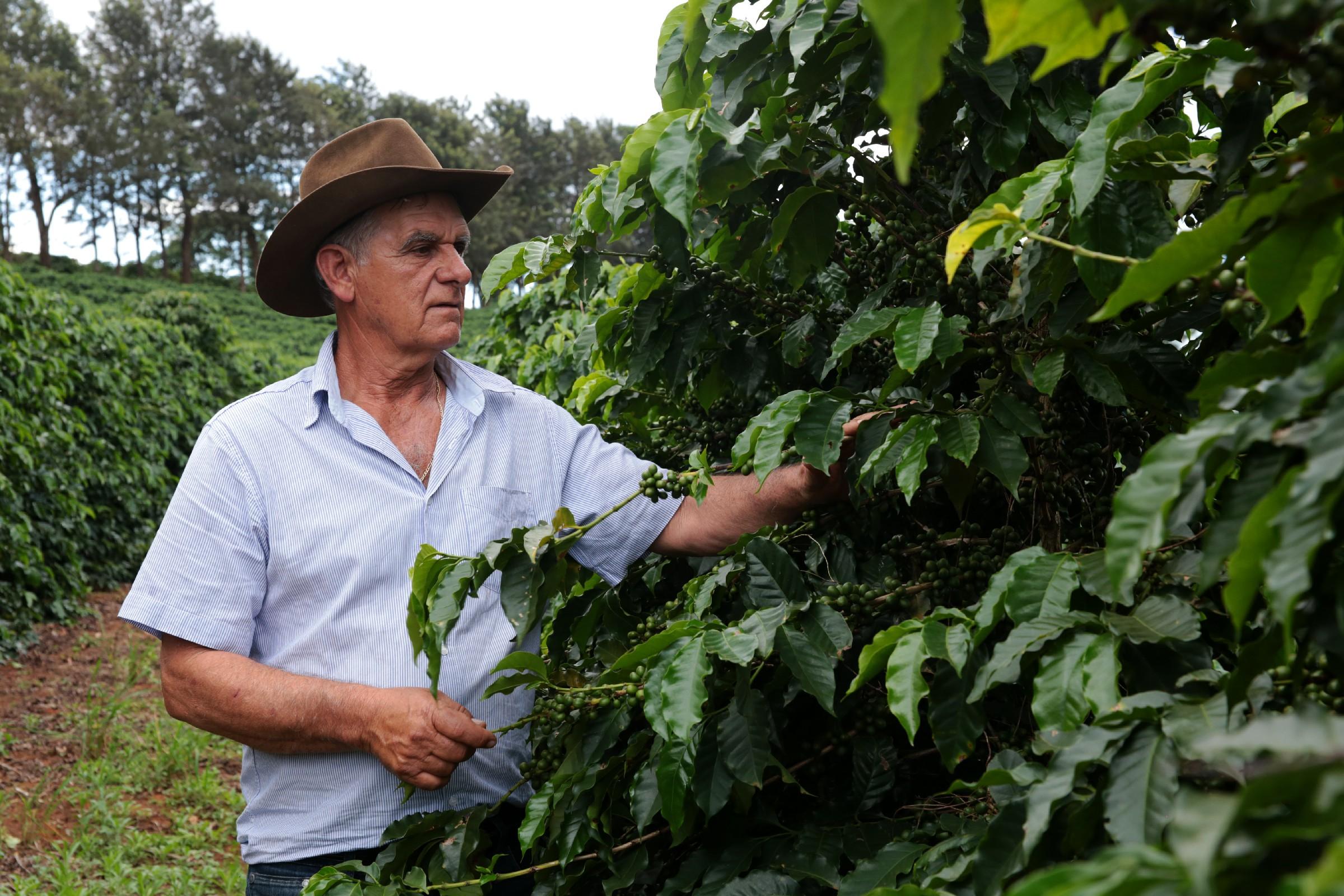 Agricultura familiar impulsiona Juruaia (MG) e safra do café pode chegar a 160 mil sacas e faturamento de R$80 milhões em 2020