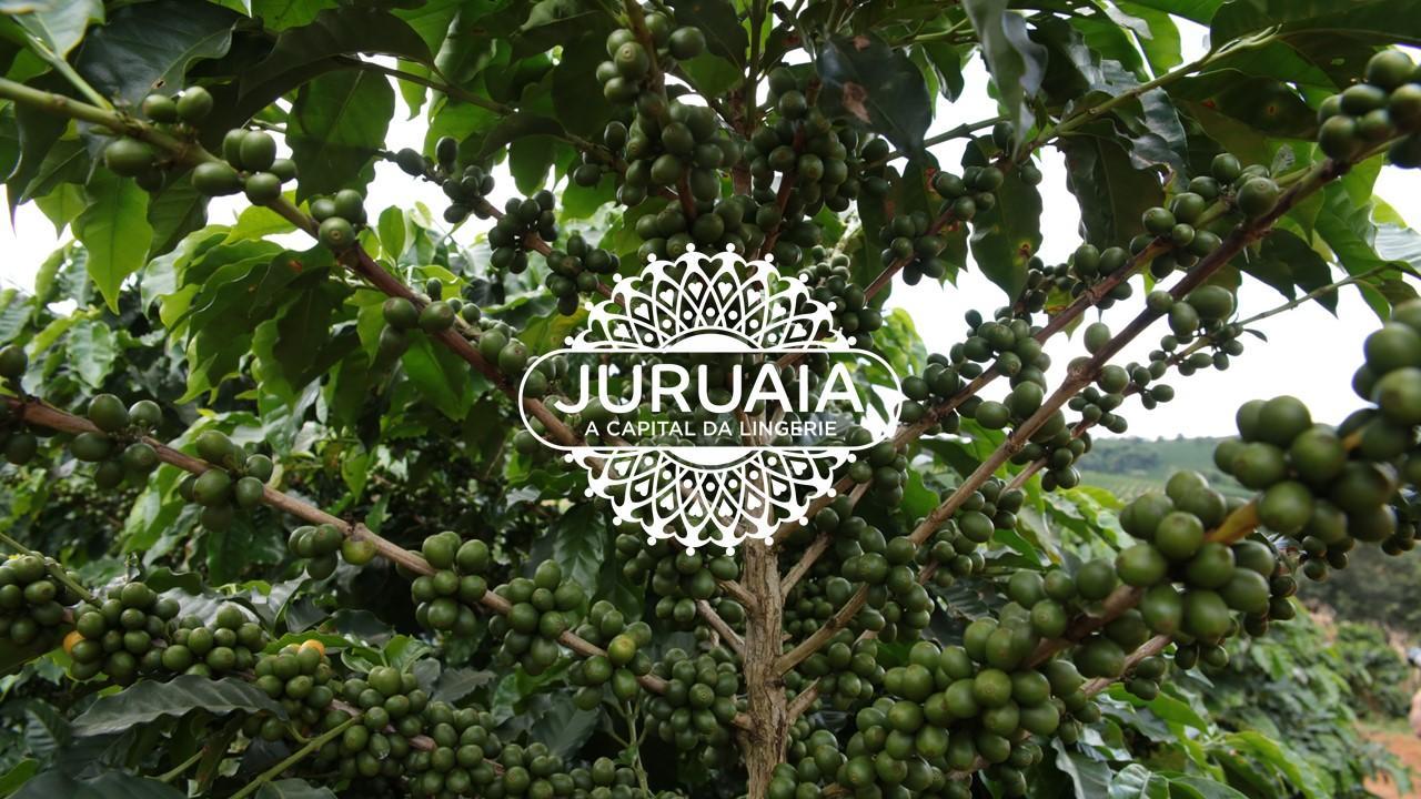 Cafeicultor de Juruaia está entre os melhores do 29º prêmio Ernesto Illy